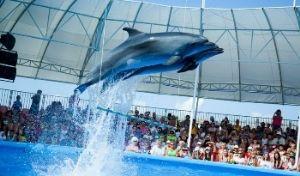 Поездка в Дельфинарий в Парке
