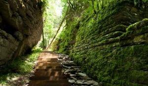 Экскурсия Тисо-самшитовая роща и Воронцовские пещеры